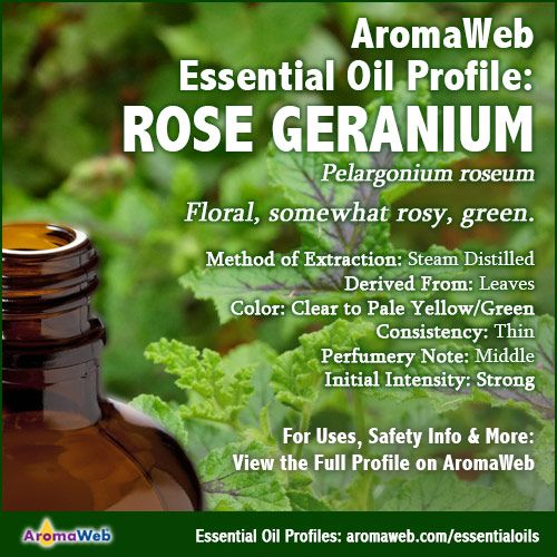 Geranium Essential Oil Profile | Essential Oil Profile