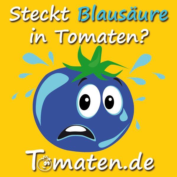 tomaten blausäure