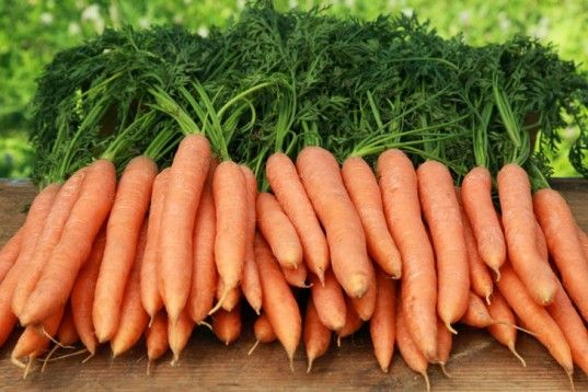 Carrot- zanahoria