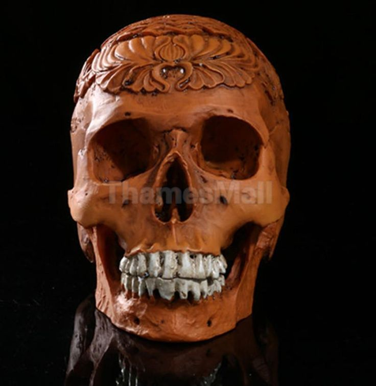 1:1 Human Skull Model Anatomical Medical Skeleton Halloween Yellow Carving