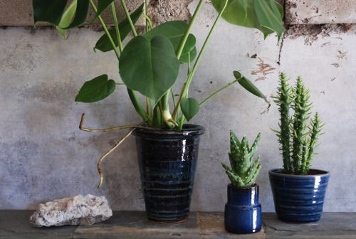 blue ceramic, plants, stones, raw, interior design, peaceful ranch