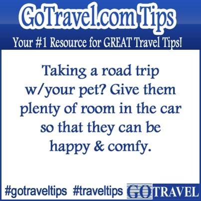 ... about Great dog or cat ideas on Pinterest | Anxiety, Cars and Lavender
