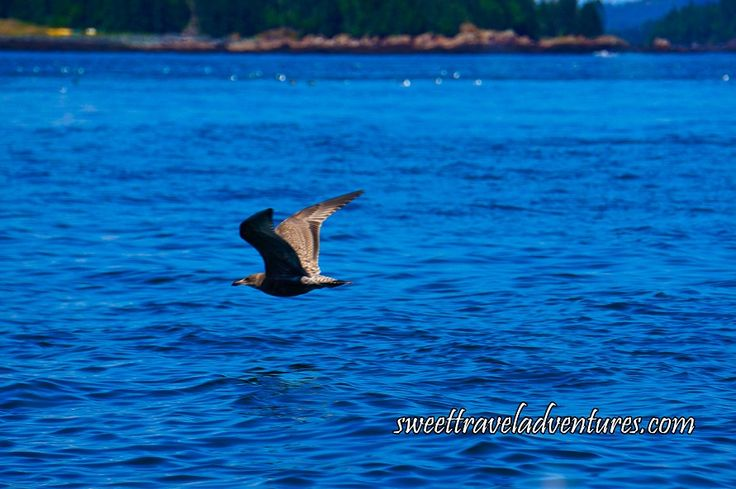 Bird Seen on Whale Watching Tour in the Bay of Fundy, New Brunswick, Canada