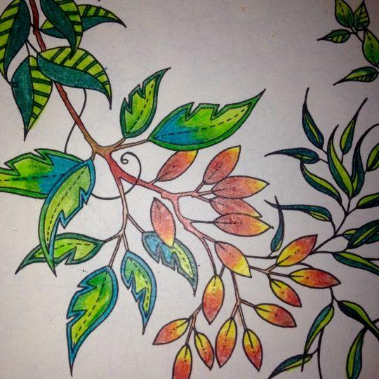 59 Best Secret Garden Coloring Book Images On Pinterest
