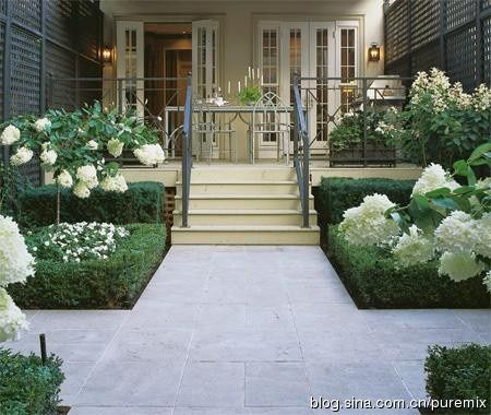 Courtyard entry of boxwood and Pee Gee Hydrangea Tree form ♥