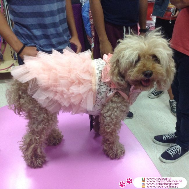 Ceremony Dress in Pink for Small Dogs and Chihuahuas #PetClothings #Poodle - Ceremony Dress for small dogs and chihuahua, very chic, with lace on the bodice and ruffled skirt; available in 5 sizes for chihuahua, poodles, Pugs..