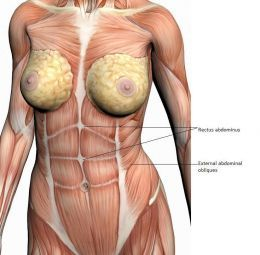 Best Stomach Exercises for Transverse Abdominals