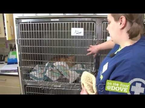 In this week's Paws and Effect post, the gang helps Karen figure out how she can get her aggressive cat the vet care he needs. This video from DoveLewis Animal Emergency Clinic is part of the post, which you can read here: http://www.paws-and-effect.com/aggressive-fractious-cat-veterinarian-restraint/
