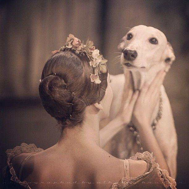 """#ballet #giselle #backstage #dog #grayhound"""