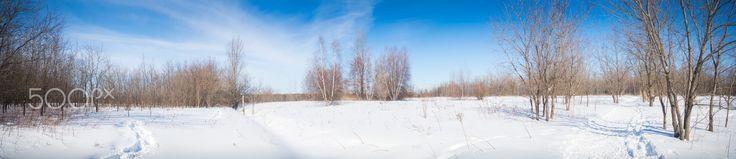Winter landscape - Winter landscape