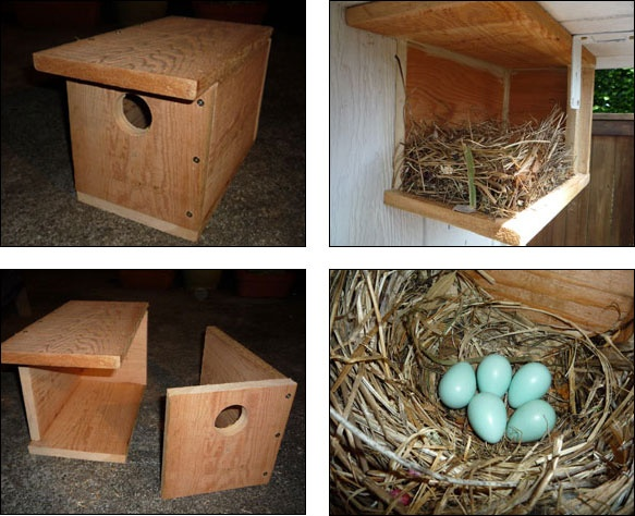 How to Build Your Own European Starling Bird Nest Box ...