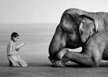 Une belle photo d'Afrique, ce petit garçon qui lit un conte à un éléphant
