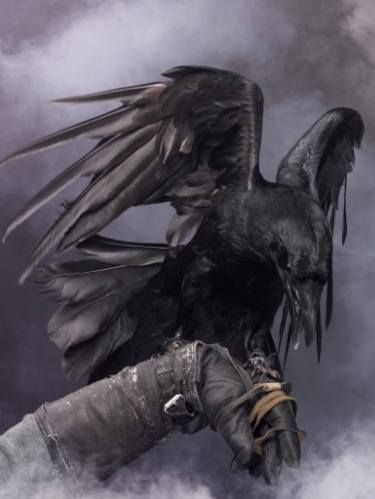 "Saatchi Art Artist Vladislav Agafontcev; Photography, ""Big Black Raven #1. Limited Edition of 10."" #art"