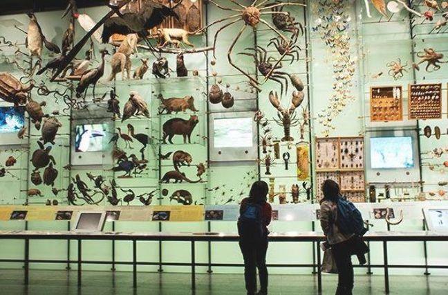 e67804860cde3d7e679f4e302841efaf - How Do I Get To The Museum Of Natural History