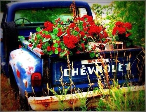 Charmant Old Chevy Truck.