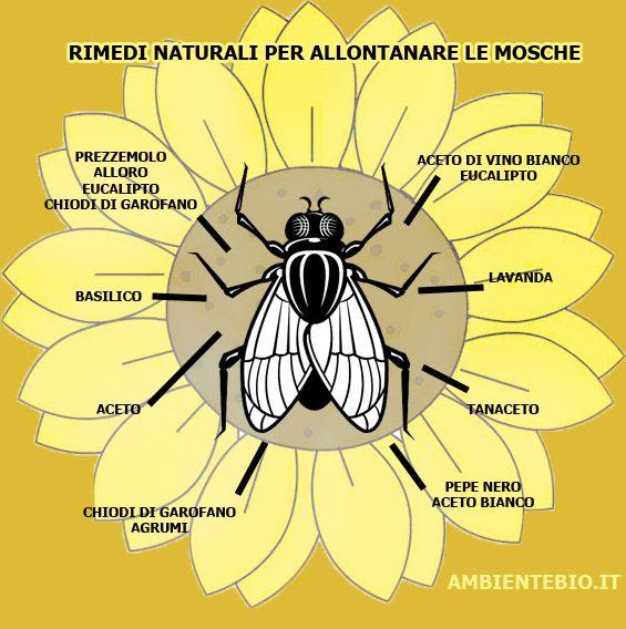 Come allontanare le mosche usando rimedi naturali