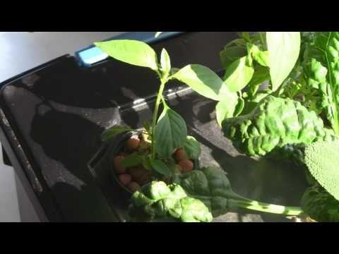Home Made Windowsill Hydroponic Herb Garden - All