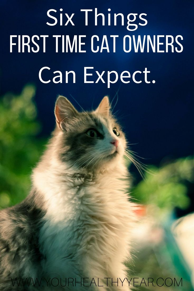 What First Time Cat Owners Can Expect