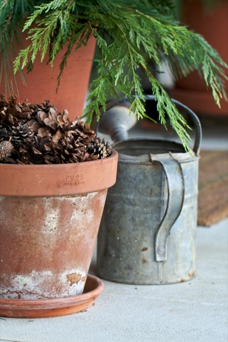 pots_of_pinecones_and_pine