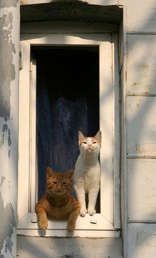 Kittehs in the window by Juliane Meyer