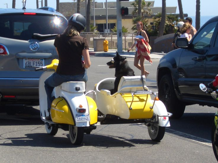17 Best images about Scooter Lounge on Pinterest ...