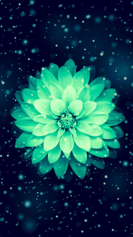 картинки цветка как на айфоне свежий воздух