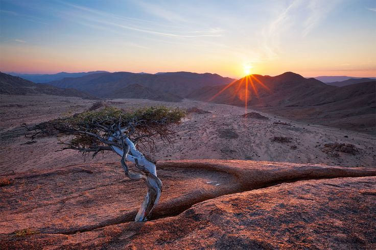 landscape photograph of a stunted tree atop a granite koppie in quiver tree valley in the richtersveld national park