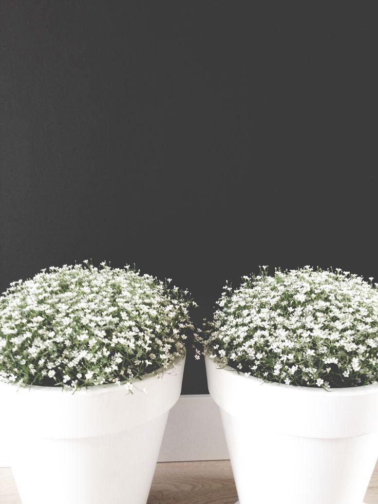 Witte potten met gipskruid. Simpel en chique!