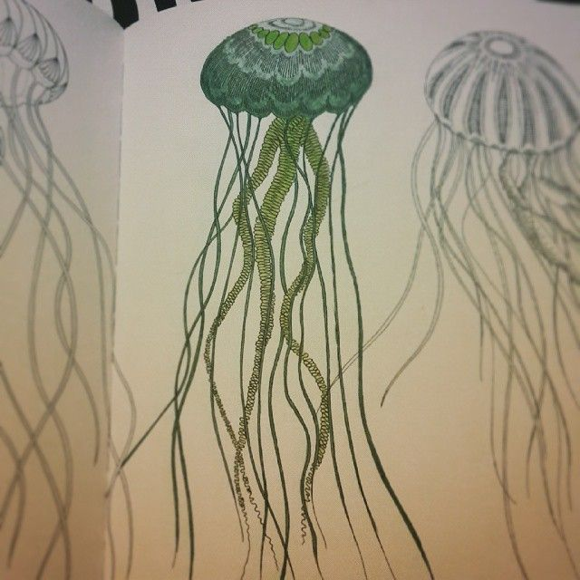 Jellyfish Animal Coloring Pages.  jellyfish in green 2234 best millie marotta r a images on Pinterest Coloring books