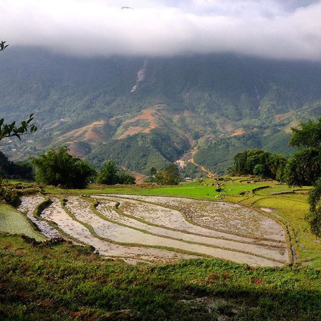 Rice fields in northern Vietnam, Sapa #vietnam #sapa #trekking #nature #ricefield #asia #igtravel #travel #travelgram #traveltheworld