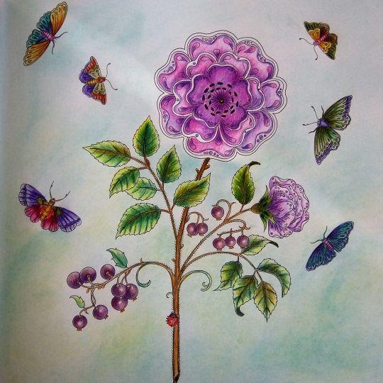 The 92 Best Secret Garden Coloring Book Images On Pinterest