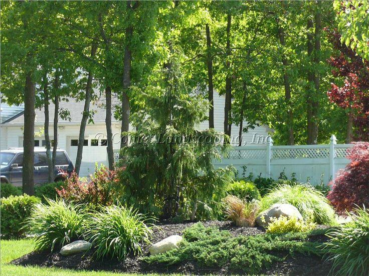 Weeping alaskan cedar by comet landscaping construction for Idea garden inc