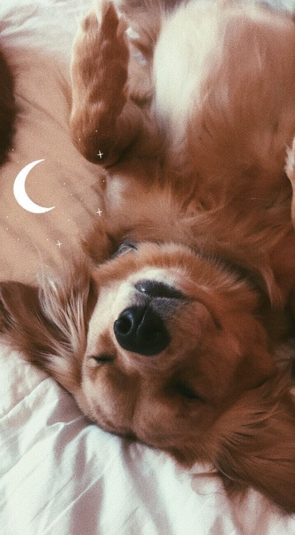 Best wallpapers cute dogs