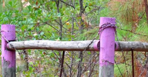 If youlive in Texas,as well as a number of other states, you have certainly seen a fence post or tree painted purple. And you probably already know not to go anywhere near it. But do you understand why? Texas and other states with the purple paint...