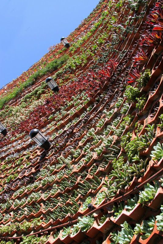 Jardín Vertical en el Hotel Ushuaia en Ibiza!