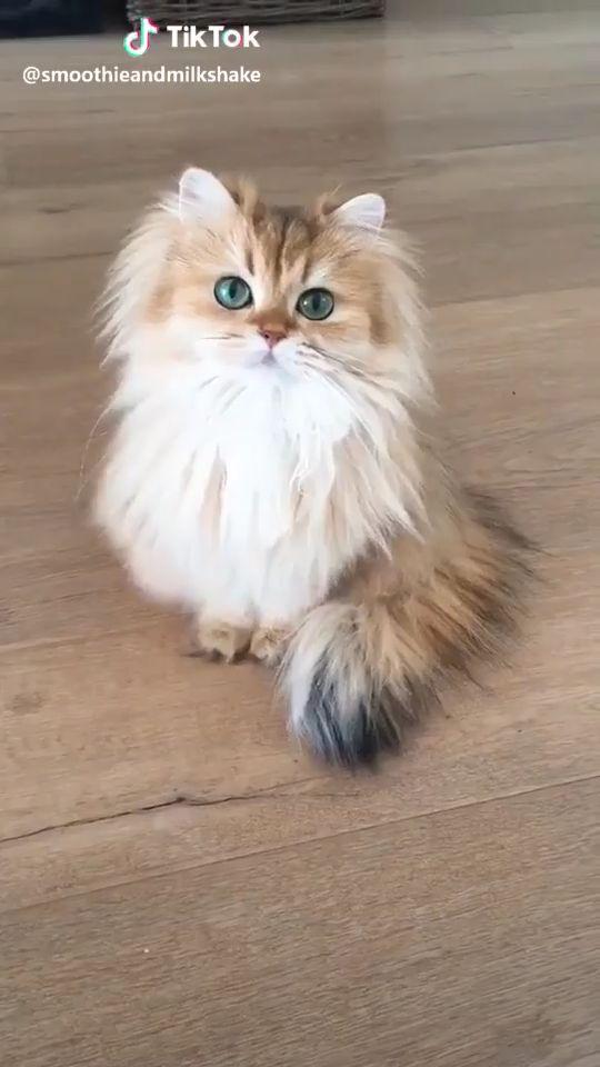 Cutest Kitten Kittens #kitten #kittens