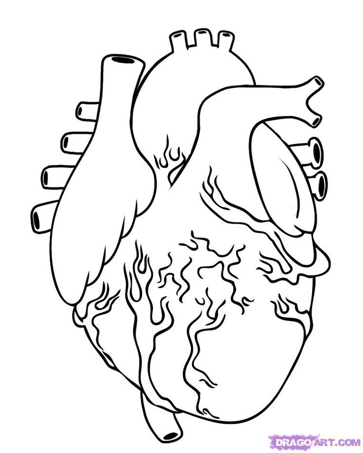 how to draw a human heart step 5 | Heart coloring pages ...