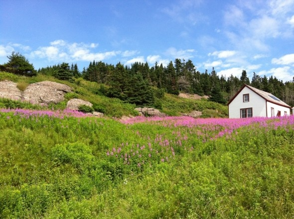 Fireweed on the hillside of Ile Bonaventure, off the coast of the Gaspe Peninsula (photo by Andrew Evans, National Geographic Traveler).