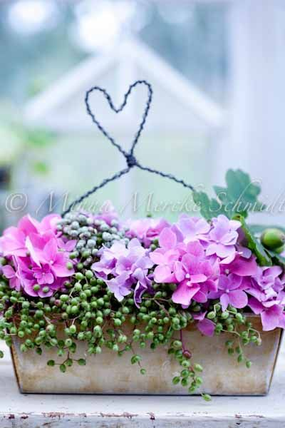 Elderberries together with hydrangea = pure beauty! beautiful  container - try make out of cement