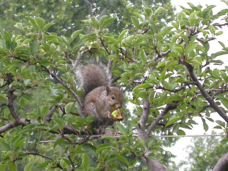 how to stop squirrels from eating flower bulbs