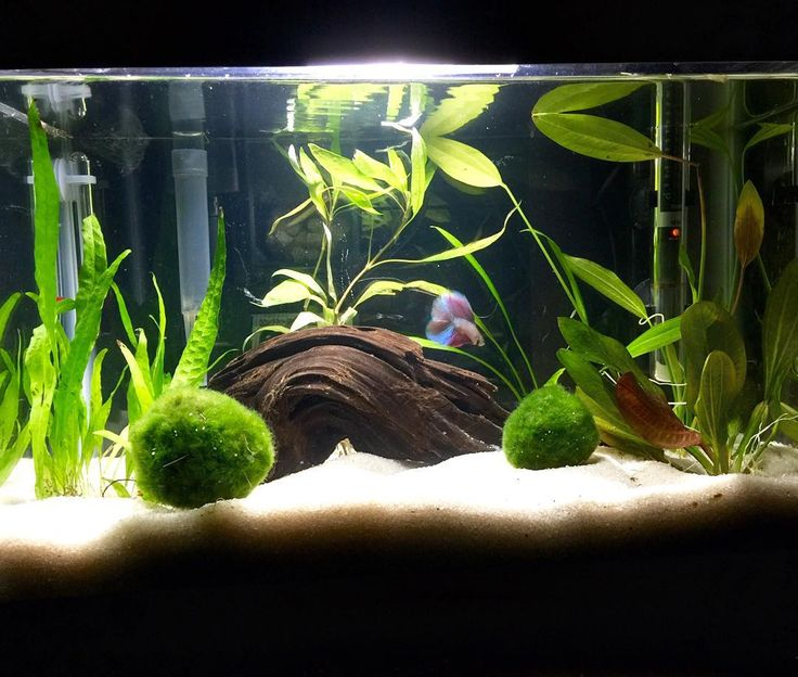 Low key obsessed with my tank fish tank betta for Large betta fish tank