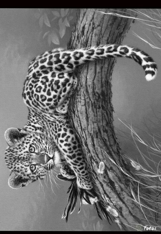 17 best ideas about amazing pencil drawings on pinterest for Advanced animal coloring pages