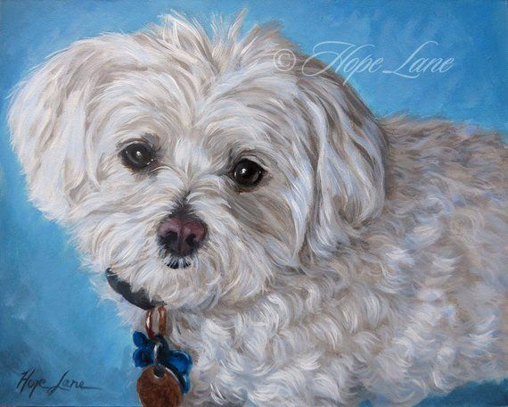 Maltese Custom Pet Portrait Painting Little White Dog White Dog