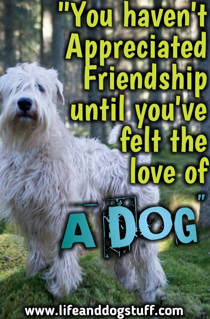 35 Most Beautiful Dog Quotes And Sayings Dog Quotes