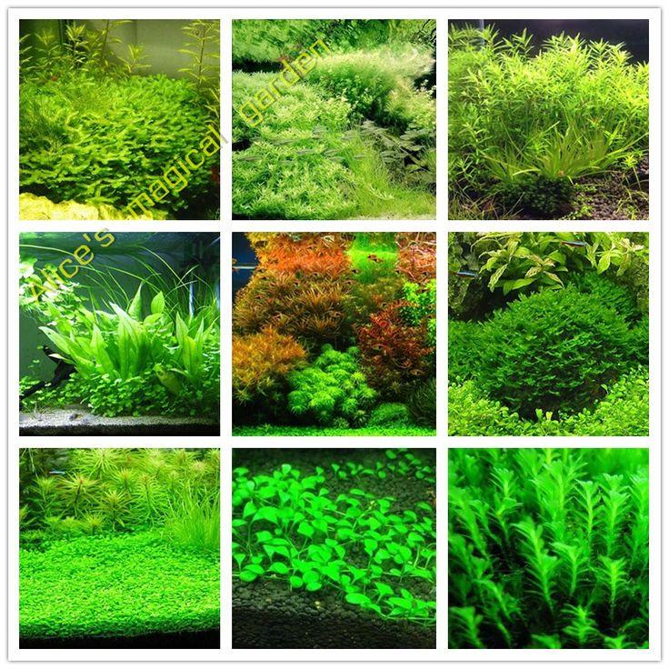 Venta caliente 1000 unids Nuevo acuario césped semillas (de la mezcla) semillas de plantas acuáticas de agua semillas familia fácil planta para la decoración del acuario