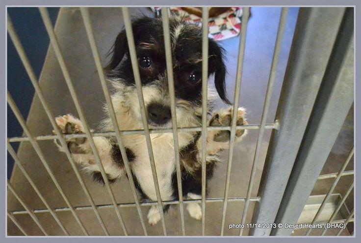 Maricopa County Dog Rescue