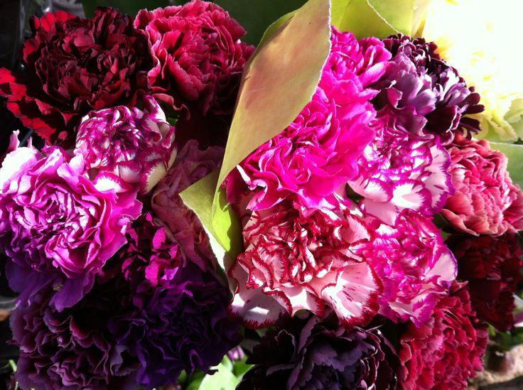 Carnation colours