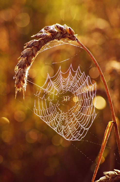 spider web in the fall field