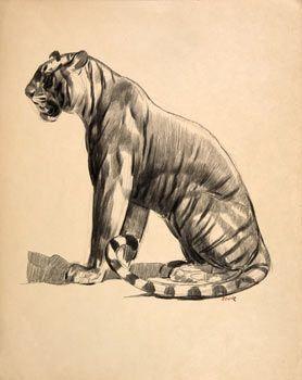 Tiger by Paul Jouve