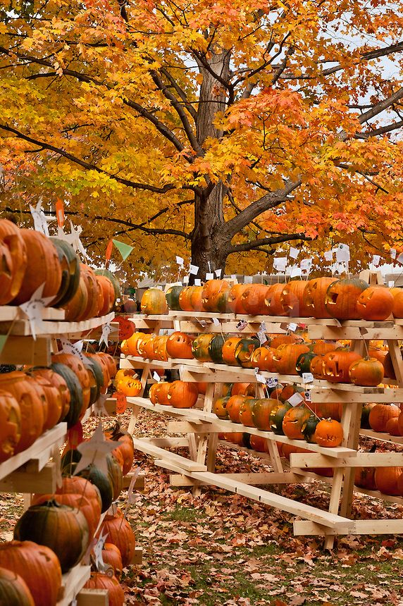 Pumpkin festival, Keene, Cheshire County, New Hampshire, NH, USA #NewHampshire   Re-pinned by www.avacationrental4me.com